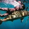 Speardiver Predator Red Camo Wetsuit